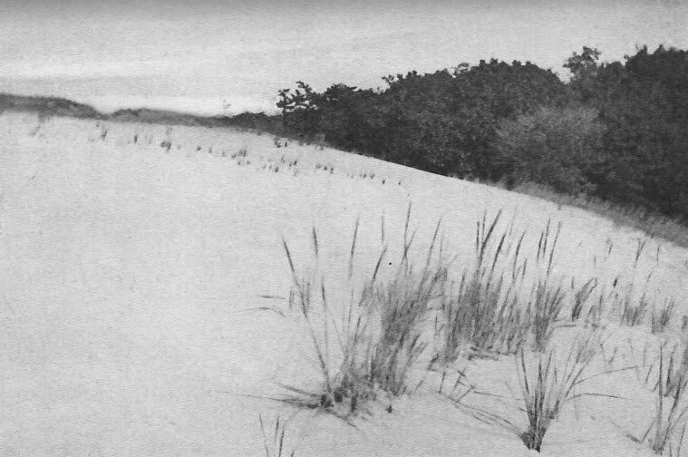 The sand dunes drifting in upon the trees